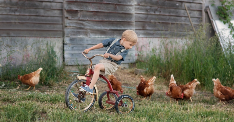 little boy on a farm riding a rustic tricycle, playing with chickens
